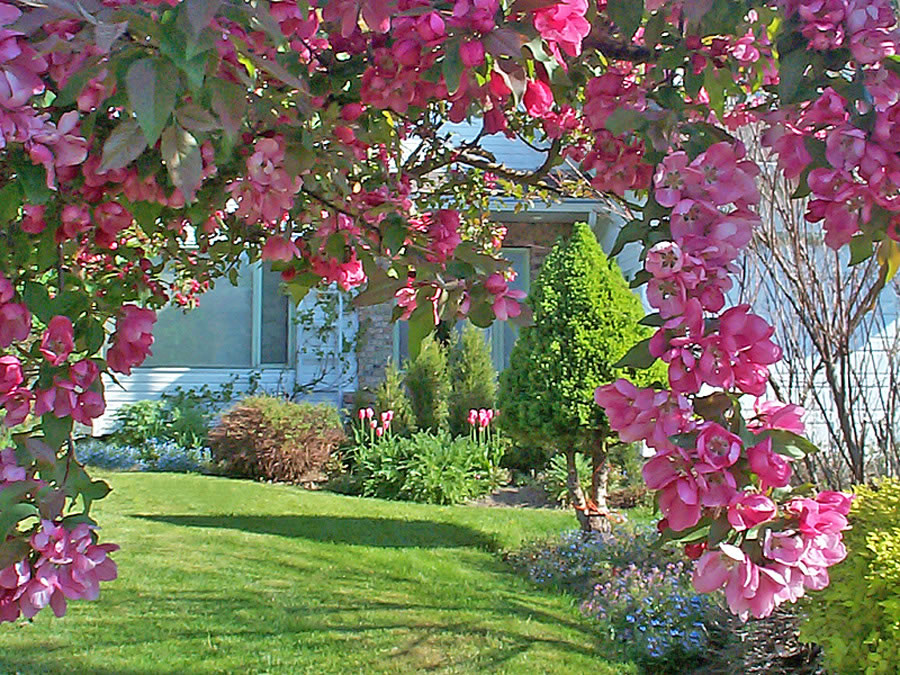 Crabapple malus terrace bc may garden for Terrace trees