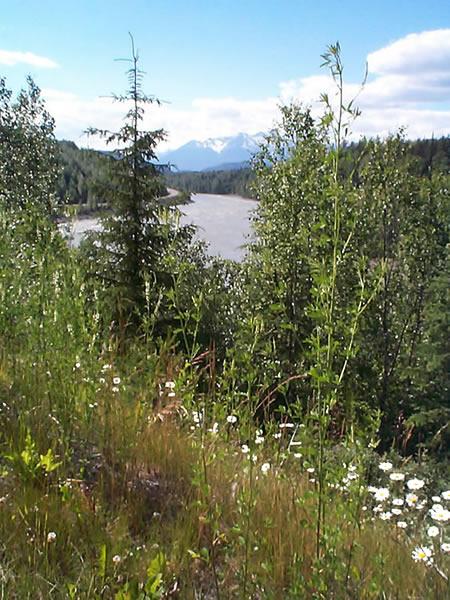 Skeena river east of terrace bc wildflowers